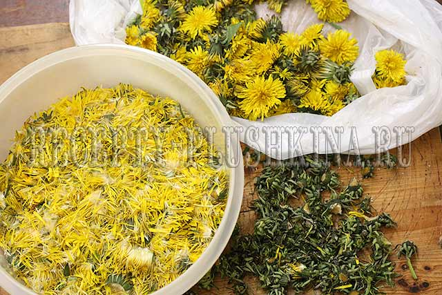 подготовили цветки одуванчиков