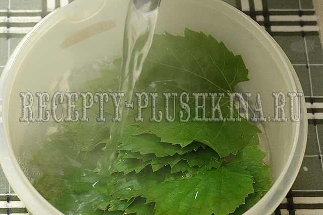 рецепт долмы из виноградных листьев